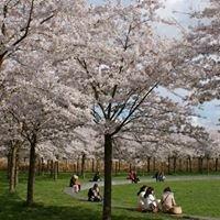 Japanse Park Amstelveen (Amsterdamse Bos)