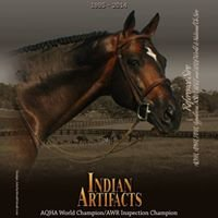 Indian Artifacts AQHA-AWR Stallion