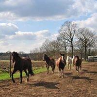 Paarden de Poedertoren  Bosritten en vakanties te paard