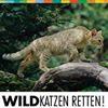 Wildkatzen retten