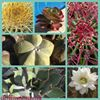 Cactus TONI Moreno SL