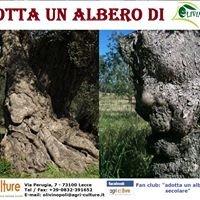 Adotta un albero di olivo secolare di OLIVINOPOLI