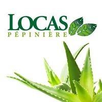 Pépinière Locas