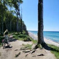 Gespensterwald an der Ostsee