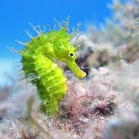 East Coast Divers Mallorca