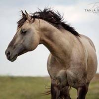 Fleetwood Farms Quarter Horses