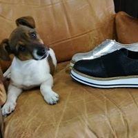 Mariogallarini calzature&accessori