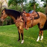 JM Quarter Horses