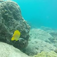 Try Scuba Diving - Key West