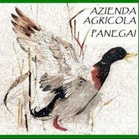 Azienda Agricola Panegai