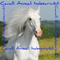 Cavalli  animali Indescrivibili