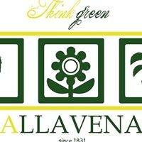 Allavena think green
