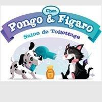 Chez Pongo et Figaro