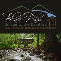 Black Palm Cape Tribulation