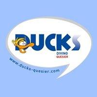 Ducks Diving Quesier