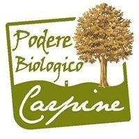 Agriturismo Carpine