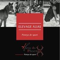 Elevage Alias - Poneys De Sport