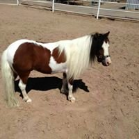 Miniature Horse Club of Southern Nevada