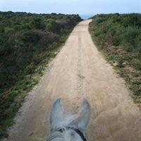 Asd Planet horse