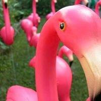 Flamingo Breeze