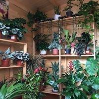 Centro de Jardineria Gavin C.B.