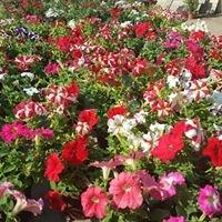 Centro de jardineria