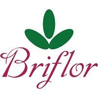 Briflor Centro Ingrosso Fiori e Articoli per Fioristi