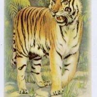 Osteria la Tigre