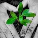 The Sustainability Market