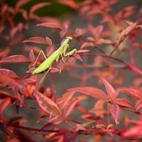 Praying Mantis Kung Fu of Worcester County