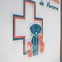 Clinique vétérinaire de Maremne
