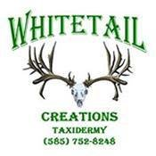 Whitetail Creations Taxidermy Studio
