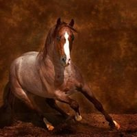 Ingram Quarter Horses