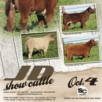 JD Show Cattle