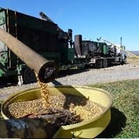 Greenmount Grain Roasting LLC