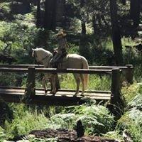 Jaquima a Freno Morgan Stock Horses