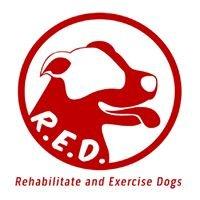 R.E.D Rehabilitate & Exercise Dogs