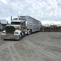 scott Graham trucking and cattle comp. world headquarters