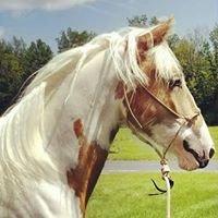 DTD Equestrian. Dare To Dream