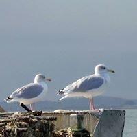 Location vacances La Rochelle, chambre d'hôtes, B&B, selfcatering