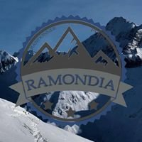 Ramondia, Nicolas Bernos accompagnateur en montagne