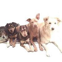Mind of Dog, LLC: Dog Training and Walking