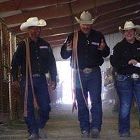 Full House Elite Performance Stock Horse Sale