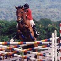 LM Equestrian