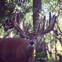 Steve Porter's Trophy Whitetail