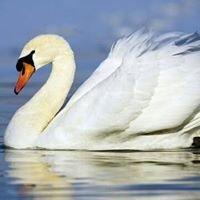 The White Swan Hoddesdon