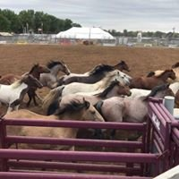 Pioneer City Rodeo