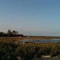 l'île aux oiseaux (Bassin d'Arcachon)
