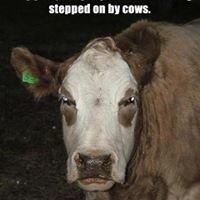 Abilene Livestock Auction