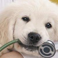 Riabilitazione motoria e Fisioterapia del cane e del gatto